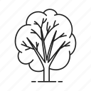 forest, garden, leaf, nature, park, plant, tree