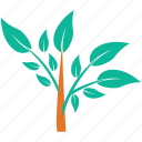 leafy, leafy plant, nature, plant icon