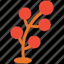 tree, tree graphic organizer, nature, plant