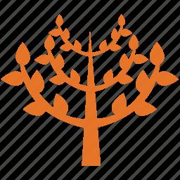 leafy, leafy plant, pyramidal form, tree icon