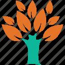 leafy, plant, spreading, broad leafed