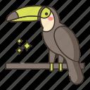 bird, exotic, toucan