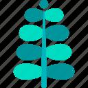 fern, foliage, leaf, nature, plant, royal, tropical
