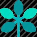 foliage, leaf, nature, plant, schefflera, tropical icon
