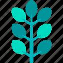 ash, foliage, leaf, nature, plant, tropical