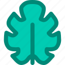 foliage, leaf, nature, philodendron, plant, split, tropical