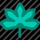 aralia, foliage, japanese, leaf, nature, plant, tropical