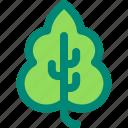 basil, foliage, leaf, nature, plant, tropical