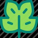 foliage, leaf, nature, plant, tropical, tulipifera