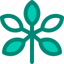 foliage, leaf, nature, plant, schefflera, tropical