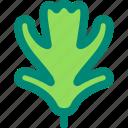 foliage, hawthorn, leaf, nature, plant, tree, tropical