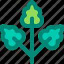 foliage, leaf, nature, plant, rowan, tropical
