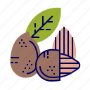 almond, food, fruit, fruit icons, raw food icon