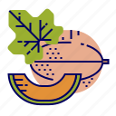 cantaloupe, fruit, fruit icons, raw food icon