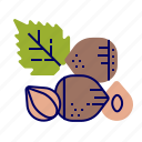 food, fruit, fruit icon, hazelnut, raw food icon