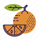 fruit, fruit icons, green, orange icon
