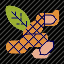 fruit, fruit icons, green, peanut, toasted icon