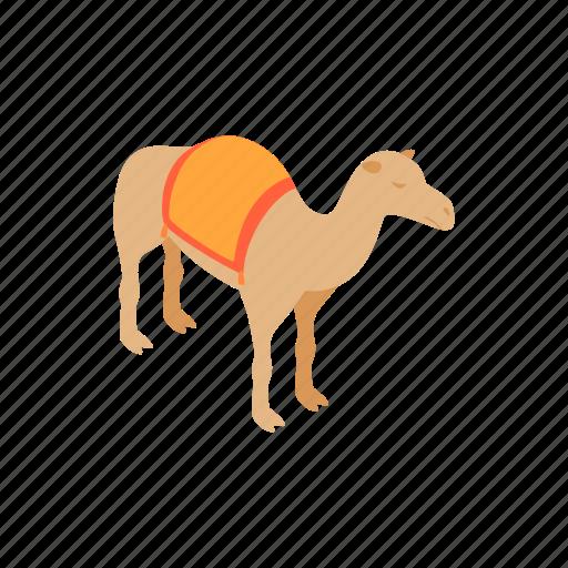 animal, camel, desert, design, isometric, nature, travel icon