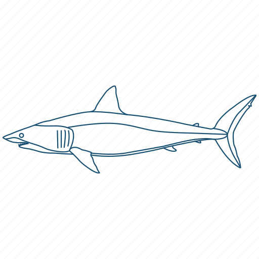animal, ocean, reef, scuba, shark, water icon