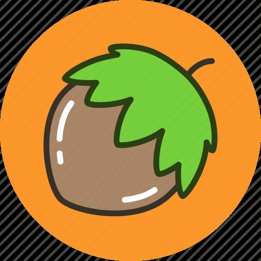 food, hazelnut, nut, vegetable icon