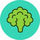 cauliflower, cooking, food, vegetable icon
