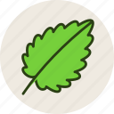 food, herb, leaf, plant, salad icon