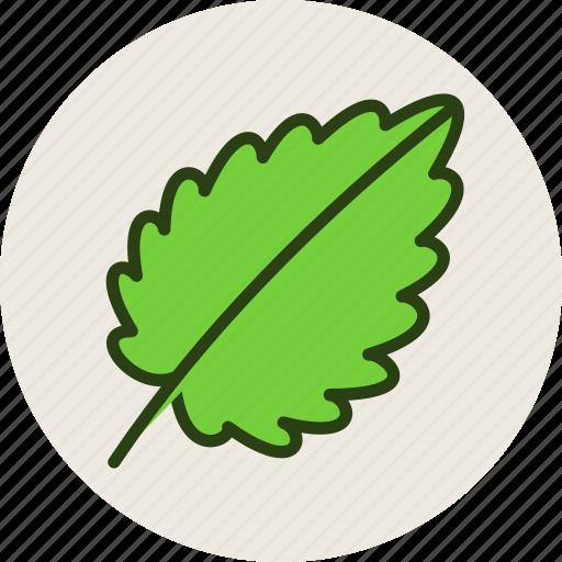 food, herb, leaf, plant, salad icon