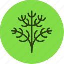 dill, fennel, food, herb, parsley, plant icon