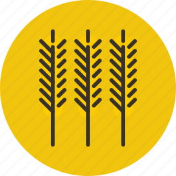 cereal, food, plant, wheat icon
