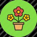 flowers, nature, pot, present