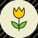 flower, nature, present, tulip