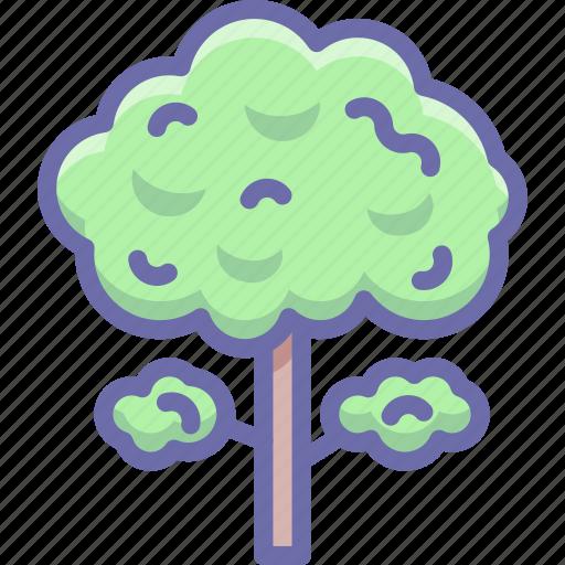 nature, tree icon