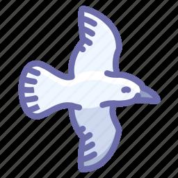 bird, fly, seagull icon
