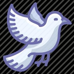 bird, dove icon