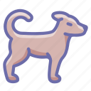 dog, pet icon