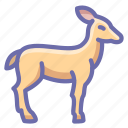 deer, doe, springbok icon