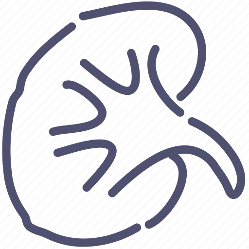 Anatomy, kidney, medical, organ icon - Download on Iconfinder