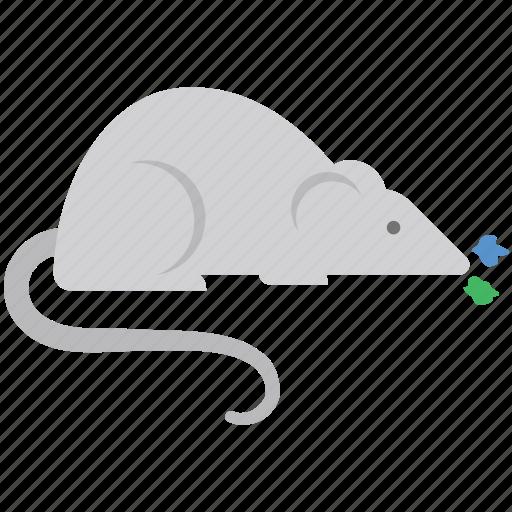 animal, cartoon rat, mouse opossum, rat, rat face icon