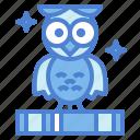 bird, cute owl, hunter, owl, pet, wisdom