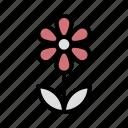 daisy, flower, love, present, romance, valentine icon