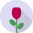 beautiful, blossom, flower, plant, rose, valentine icon