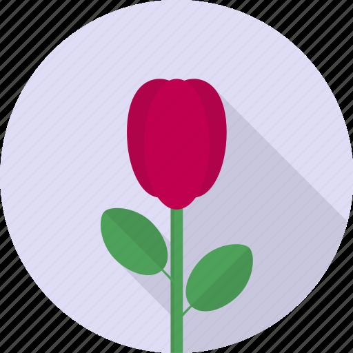 beautiful, blossom, flower, plant, rose, valentine icon