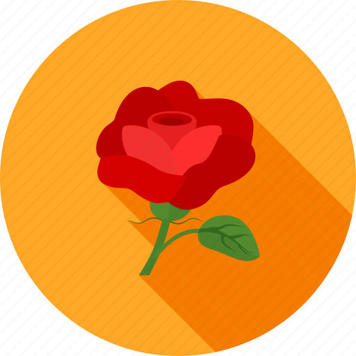 decoration, flower, nature, red, rose, roses, summer icon