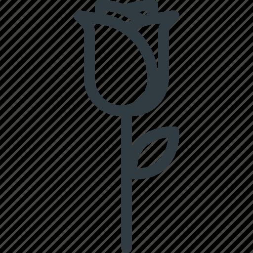 flower, rose, spring icon