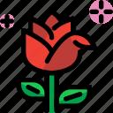 day, flower, rose, valentines