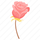day, heart, love, romance, rose, valentine, valentines icon