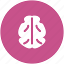 body organ, body part, brain, celebrium brain, human brain icon