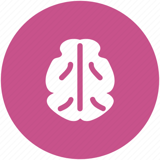 body organ, body part, brain, celebrium brain, human brain icon