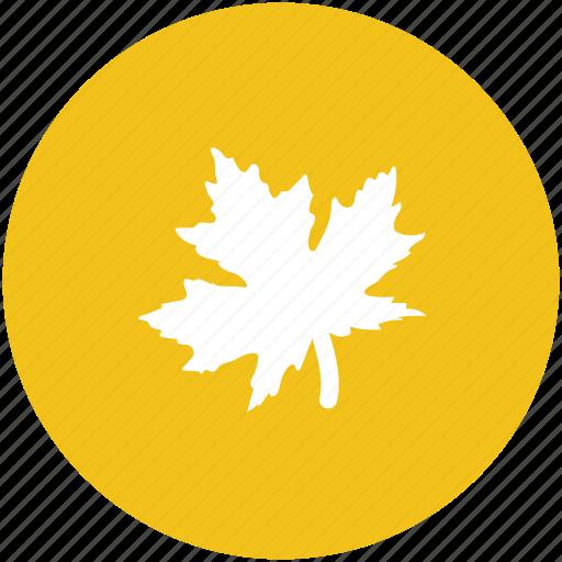 autumn leaf, ecology, foliage, greenery, leaf, nature, tree leaves icon