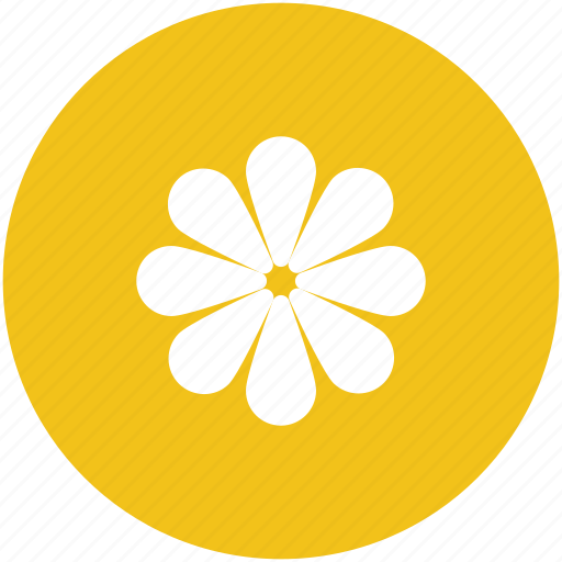 beauty, decorative flower, flower, nature, sunflower icon